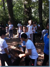 Cleaning the forest DELASALLE -- COMENIUS-31